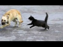 КОШКИ В ДЕЛЕ! Кошка против собаки, змеи, крокодила...