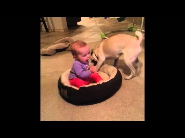 Dog Doesn't Want The Baby In His Bed!