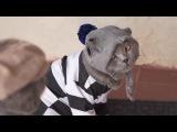 Животные, кошка ушла из дома одна - Animals, cat left home alone