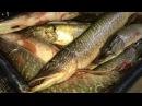 Рыбалка на Оби. Осень. и НОУ ХАУ Воблер-джиг.