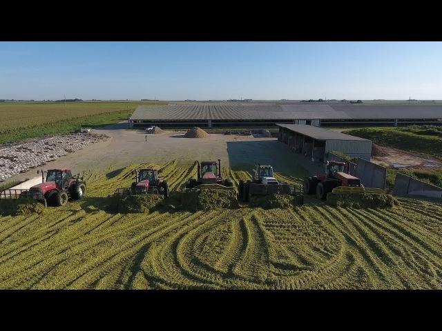 Silage harvest 2017 Iowa