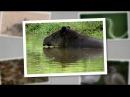 Детеныши в дикой природе 10 серия Детеныши джунглей день Baby animals in the wild 2015