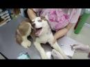 Первый раз у ветеринара