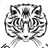 Сибирские котята. Питомник «Северный Ноктюрн»