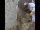 Тысячи пчёл оккупировали подвал