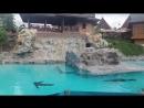 тюлени в сиам парке.аквапарк