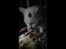 Мой кот извращенец