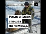 Блогеры спасают животных