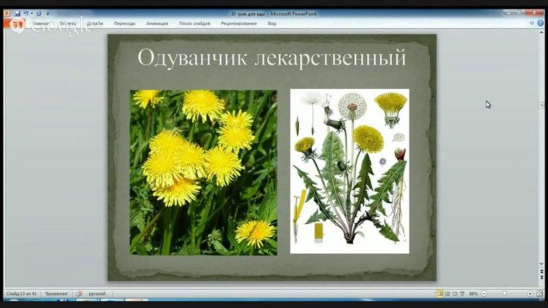 Анатолий Орлов про съедобные травы на семинаре 2014