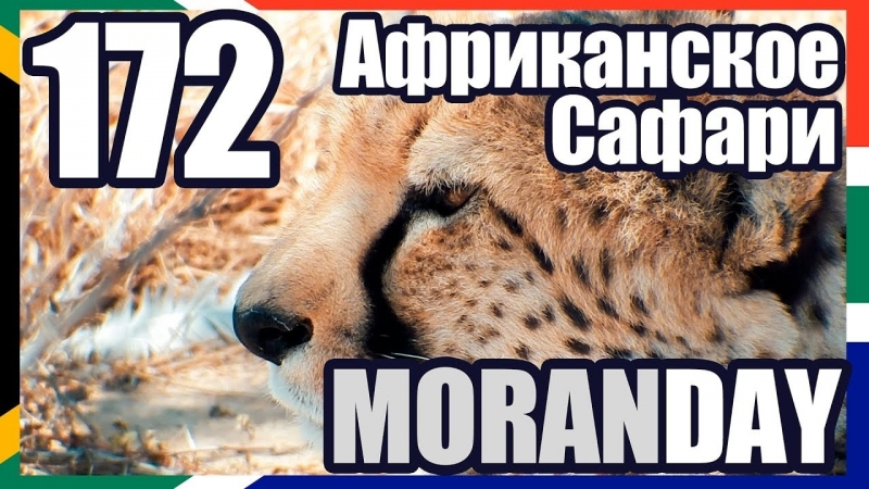 Moran Day 172 - Африканское Сафари (ЮАР) 