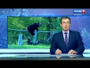 ВЕСТИ - Югория (Ханты-Мансийск) Медведи 2017