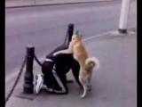 Секс с животными порно онлайн  Видео http://sexvvkontakte.ru/