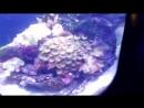 Эльдар Богунов в океанариуме 1 часть