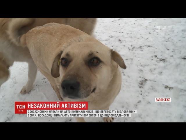 Зоозахисники розтрощили авто комунальників які перевозили відловлених собак