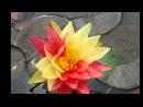 SY Vishuddhi Jayjaywanti raga1