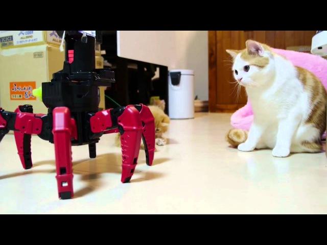 Кошки и роботы. NEW 2015