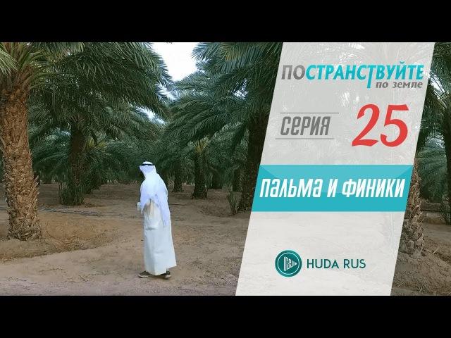 Научные факты о пальме и финиках || Постранствуйте по земле 25