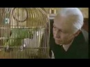 The Fast Show Unlucky Alf Parrot Sketch
