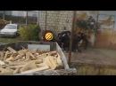 Краснодар Мужчина прыгает со второго этажа в мусорный бак чтобы уйти от погони