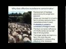 Нематоды и устойчивость к глистогонным препаратам у овец / Nematodes of sheep and antibiotics resistance (бесплатная часть вебинара)