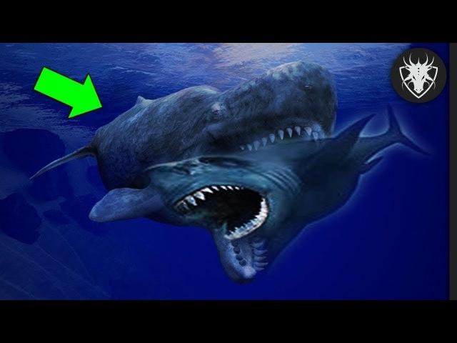 Os Maiores inimigos do Megalodon