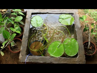 Water Lily I Platy Fish I Red Molly Fish I Pond setup aquarium