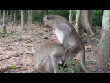 What Monkey doing Why Monkey do like this on Another monkey , Animals Life - part 182