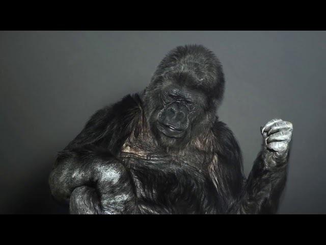 Горилла Коко обращается ко всем людям нашей планеты