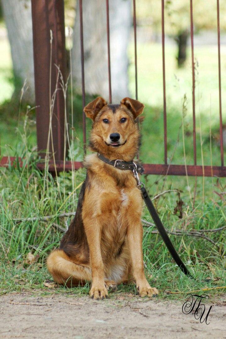 Собака ищет дом   Пухля Фото (Коломна) Собака даром