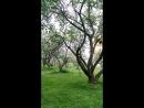 Яблоневый сад в Москве славянский бульвар