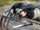 Охота на гуся с Алексеем Мельницким, или нож в работе