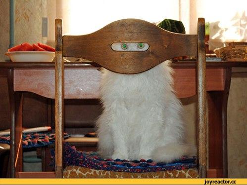 Кот за стулом