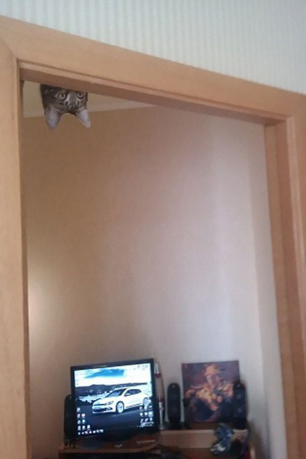 Кот над дверным косяком