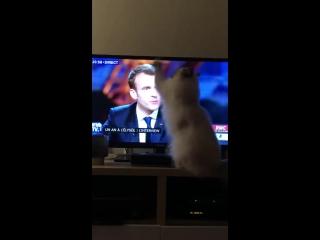 Même les chats n'en peuvent plus de ses mensonges et de sa tête de premier de la classe.