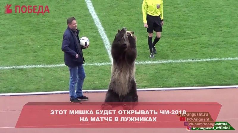 В Пятигорске футбольный матч открыл медведь