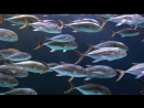 «Становление человека (2). Рождение человечества» (Научно-познавательный, исследования, 2009)
