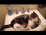 Try to stay SERIOUS -The most popular CAT videos_cut