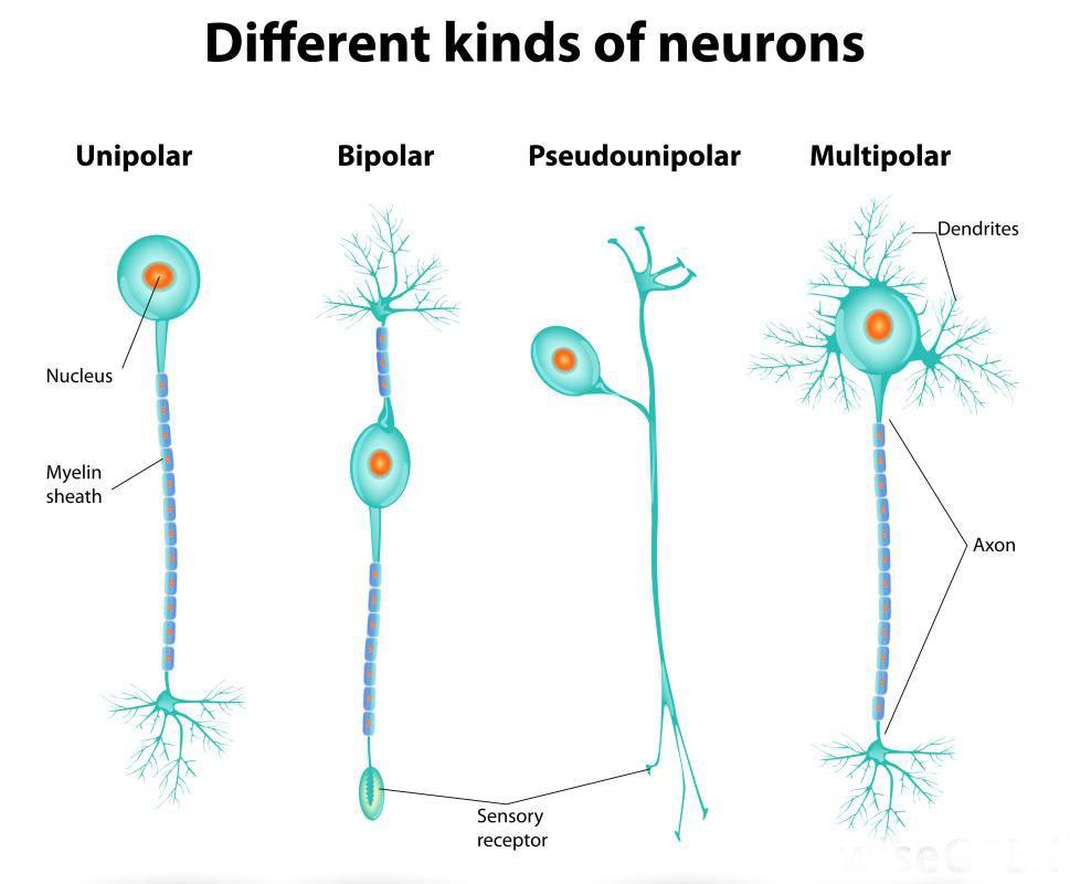 на мрт нейрон активен