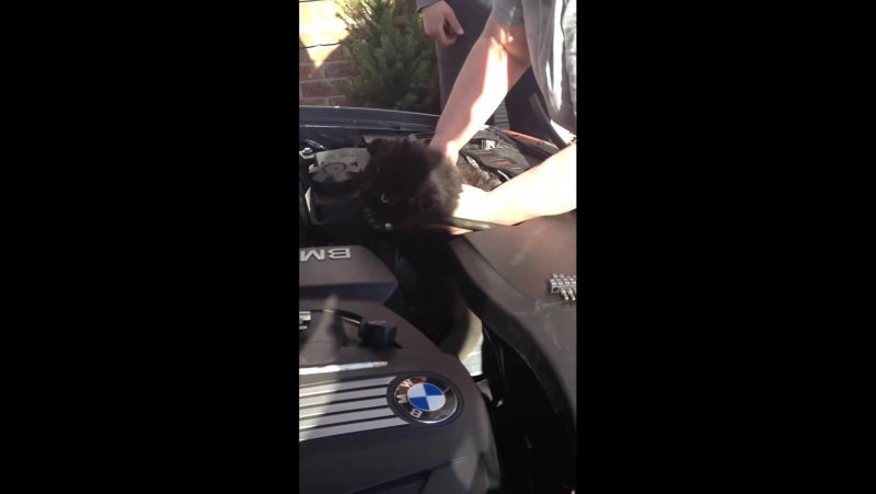Our cat trapped in car engine for two weeks.Princess is very skinny but alive and well.Amazing!