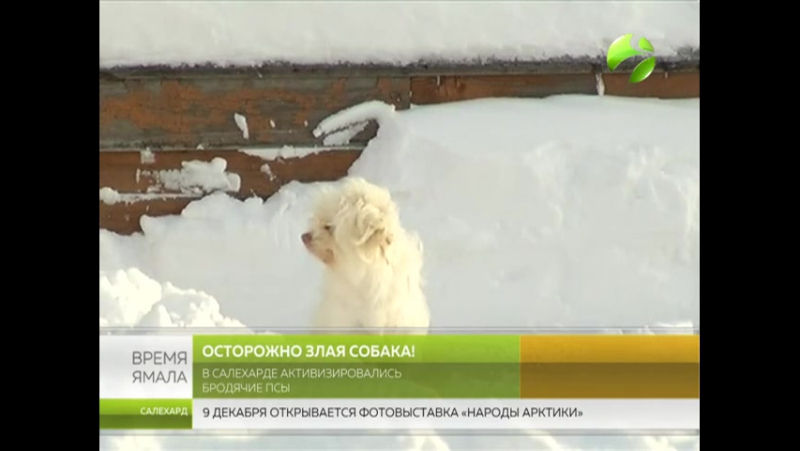 Осторожно злая собака! Салехардцы страдают от бродячих псов