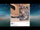 15 кошек интернета