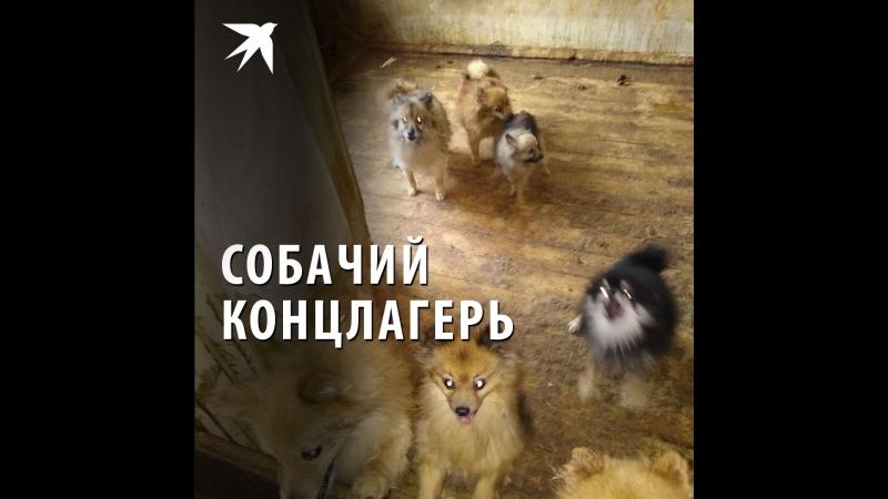 Собачий концлагерь