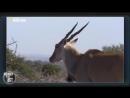 Мир животных. Дикая Африка. В объективе. Документальный фильм National Geographi