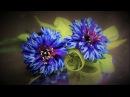 Цветок ВАСИЛЁК мастер класс КАНЗАШИ DIY Ribbon Flower Kanzashi