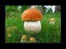 По грибы 16 сентября 2017г 2 часть