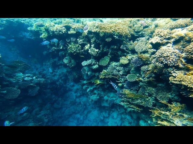 Egypt Sharm El Sheikh Reef Oasis Blue Bay Resort