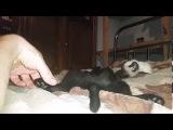 Андрей Мисин - Пришли лихие времена (прикол с кошками)