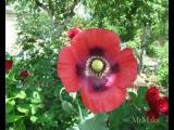 Белый день-Цветики полевые