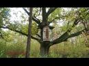 Бортники Полісся. Про вулики, що рятують ліс та чому мед смертельний