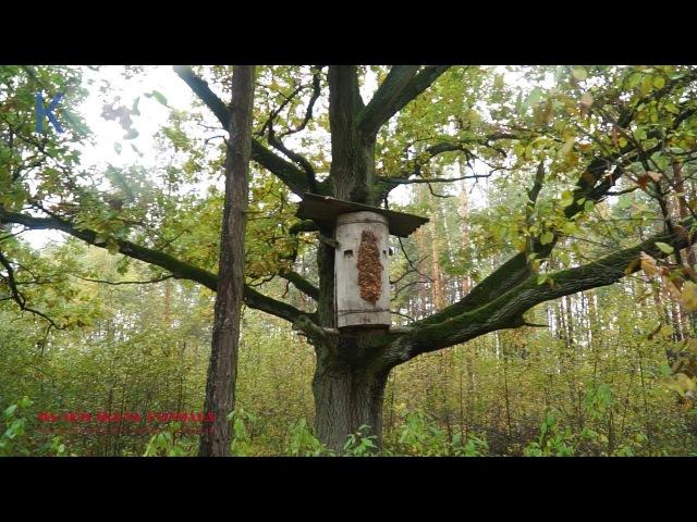 Бортники Полісся. Про вулики, що рятують ліс та чому мед смертельний...